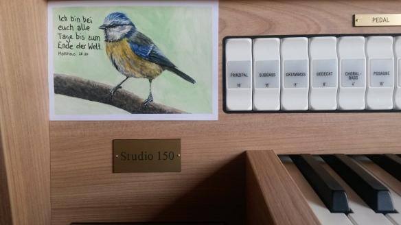 Foto - Blaumeise an der Orgel KJF