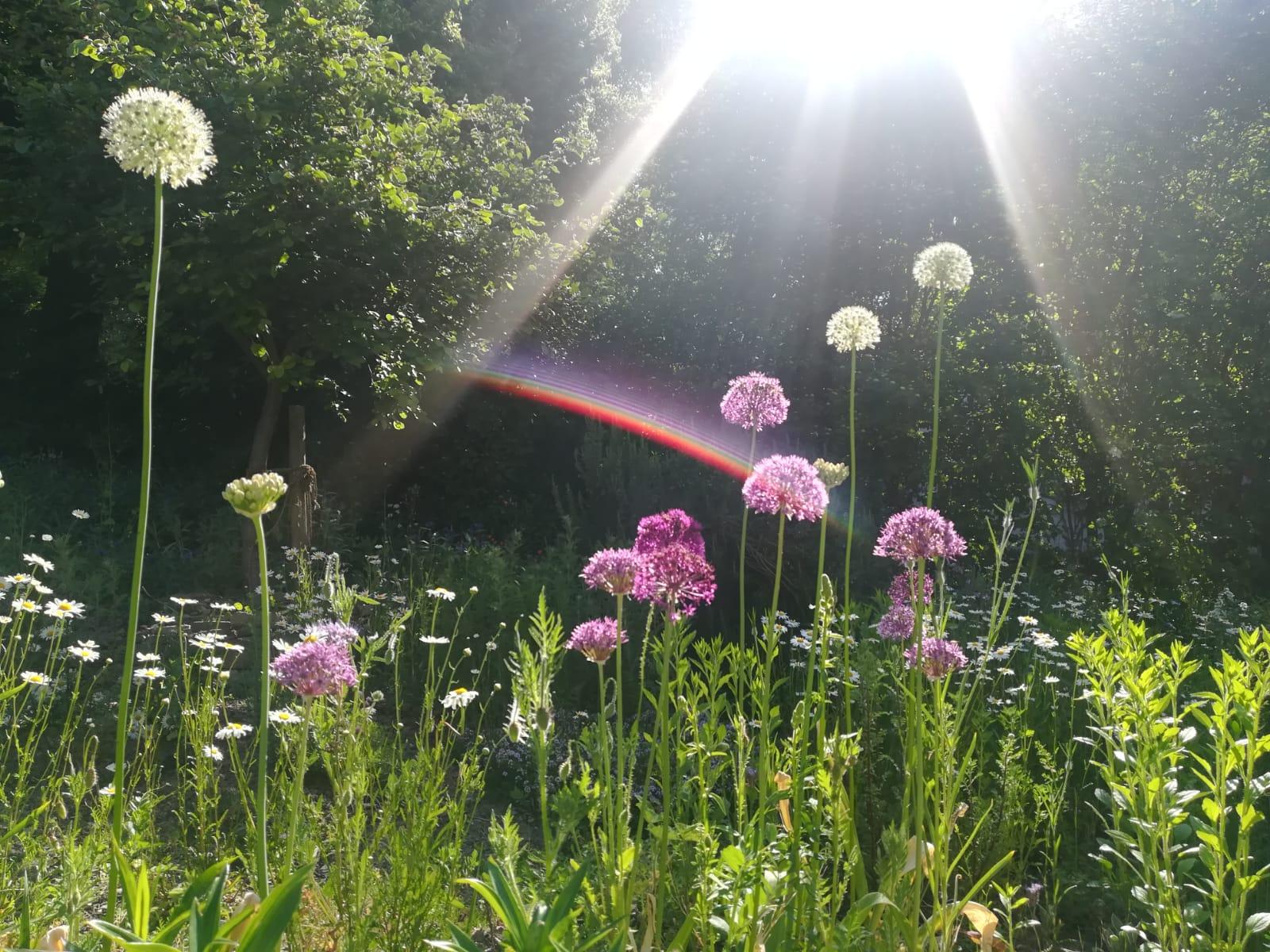 Foto - Blumen Regenbogen MF