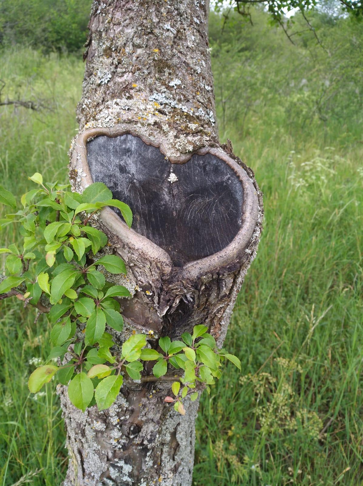 Foto - Herzlicher Baum Monika Schlich