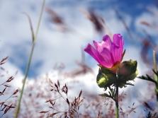 Wildblumen-Samen-Ergebnis von Wilfried Freischem