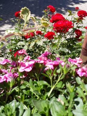 Wildblumen-Samen-Ergebnis von Elke Krause