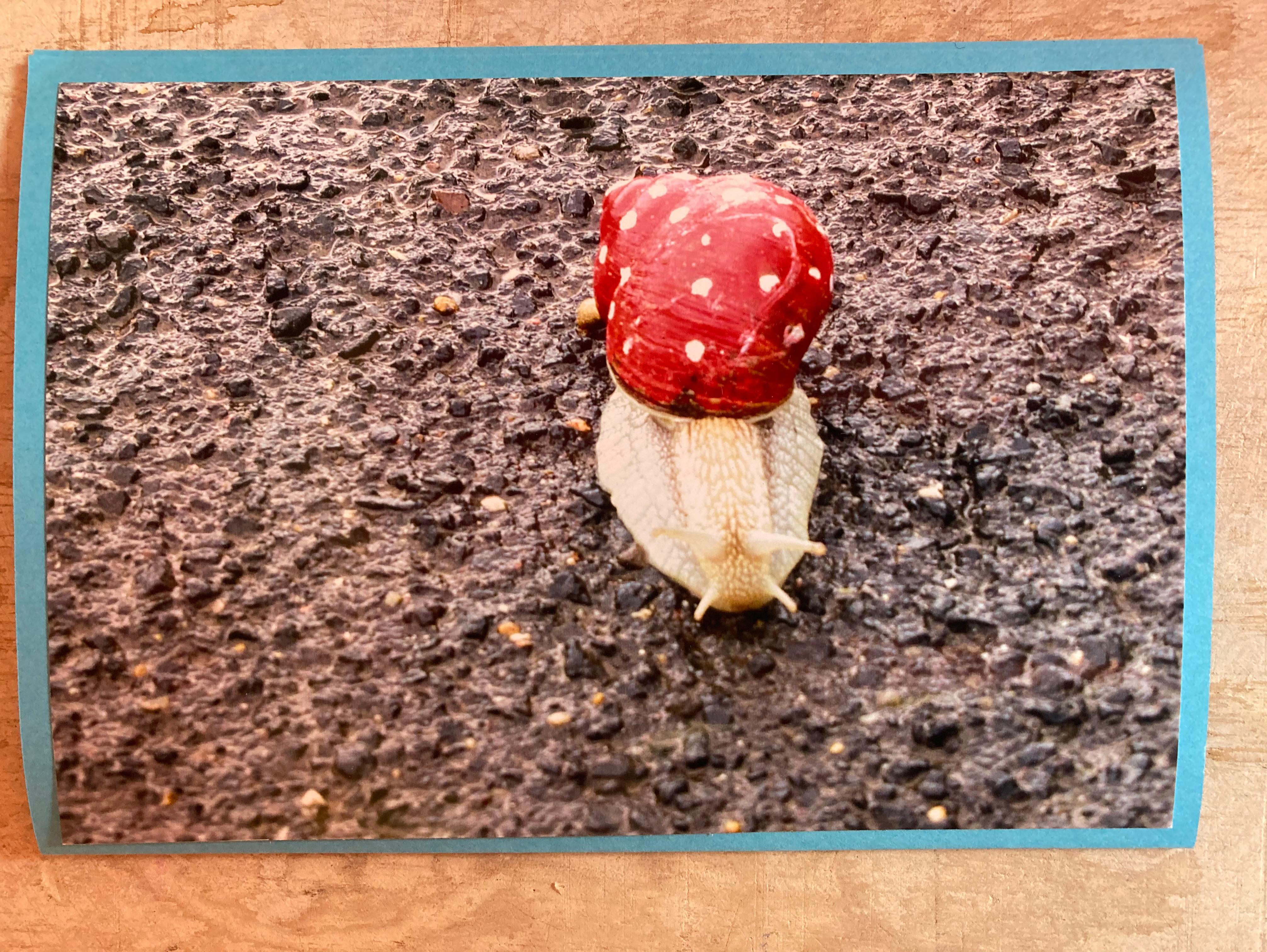 Foto - Schnecke rot weiß
